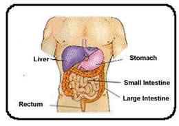 compact_digestive.jpeg