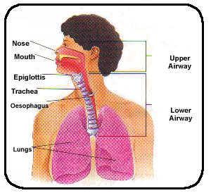 respiratory1.jpeg